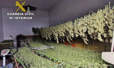 AionSur marihuana-utrera-400x240 Cuatro detenidos en Utrera y desarticulada una red de venta de marihuana Narcotráfico Sucesos Utrera