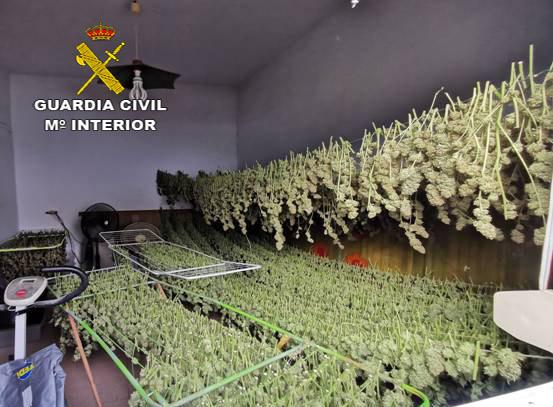 AionSur: Noticias de Sevilla, sus Comarcas y Andalucía marihuana-utrera Cuatro detenidos en Utrera y desarticulada una red de venta de marihuana Narcotráfico Sucesos Utrera