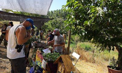AionSur mercado-la-nava-2-400x240 ¿Y si fuera posible comprar productos naturales en mitad del paraíso? Huelva Sociedad