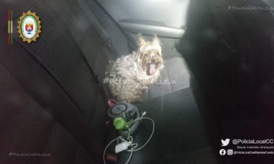 AionSur perro-castilleja-400x240 Deja a su perro una hora en el aparcamiento de un centro comercial en plena ola de calor Castilleja de la Cuesta Sucesos