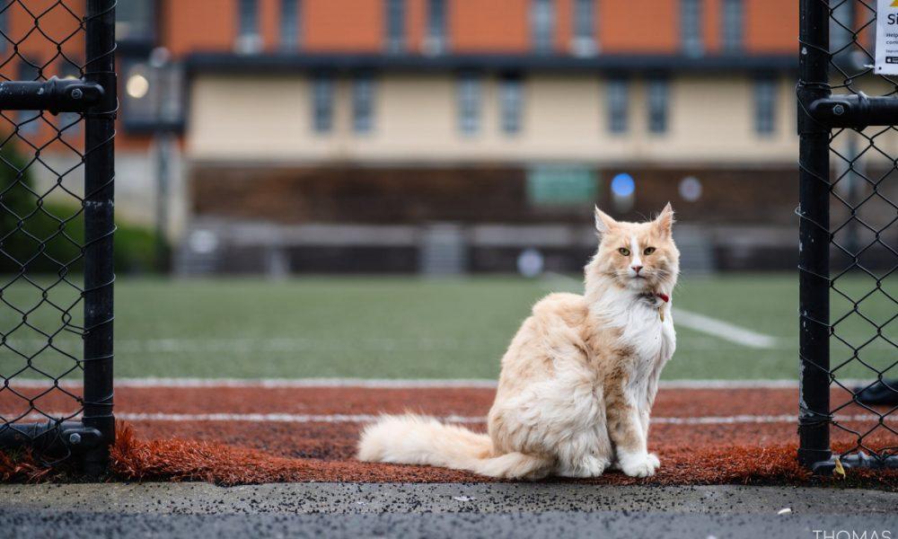 """La historia de """"Mittens"""", el gato callejero nominado a neozelandés del año por su vida aventurera"""