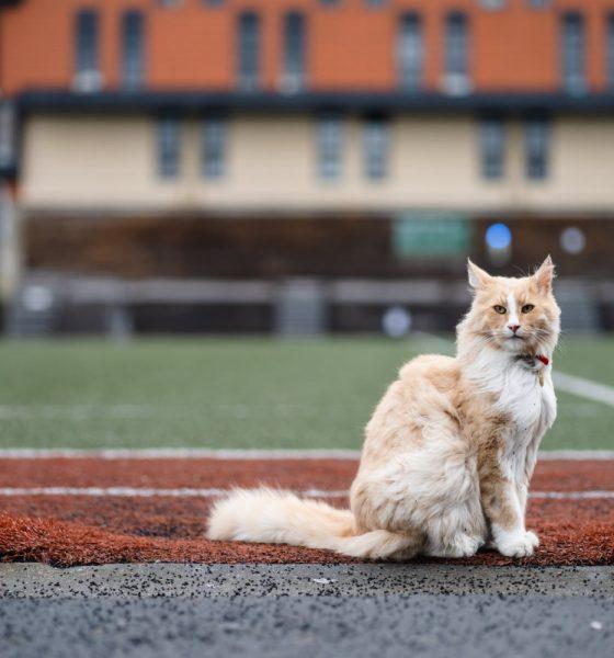 """AionSur 117951974_10157520728071497_4574868972148421373_o-min-560x600 La historia de """"Mittens"""", el gato """"aventurero"""" nominado a neozelandés del año por su vida libre en la calle Animales"""