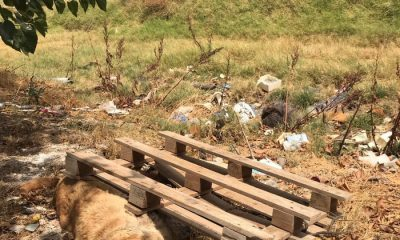 AionSur 13a4e224-c5fb-413e-b1ab-12adab71a5a0-min-400x240 Un perro aparece muerto y amarrado a un palé de madera en Arahal Animales Arahal destacado