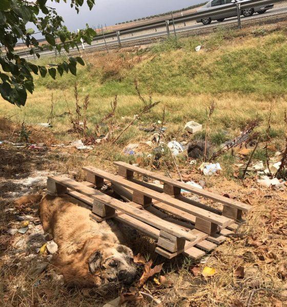 AionSur 13a4e224-c5fb-413e-b1ab-12adab71a5a0-min-560x600 Un perro aparece muerto y amarrado a un palé de madera en Arahal Animales Arahal destacado