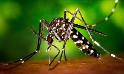 AionSur 20200812123817_1-1934299_20200815172919-min-1-400x240 Todo lo que hay que saber sobre el virus del mosquito del Nilo Medio Ambiente