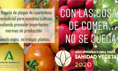 """AionSur Campana-conlascosas-min-400x240 """"Con las cosas de comer no se juega"""", nueva campaña de Agricultura en Andalucía Andalucía"""