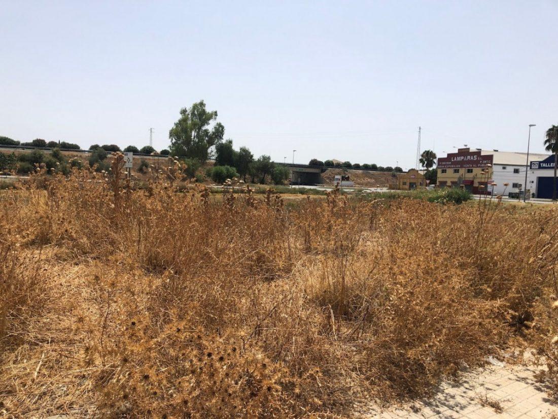 AionSur IMG_3584-min El PSOE de Arahal solicita la limpieza del entorno del Saladillo por peligro de incendio Arahal