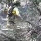 AionSur Infoca-80x80 El incendio entre Arahal y Utrera se quedó en conato pero provocó problemas de tráfico Arahal Sucesos Utrera