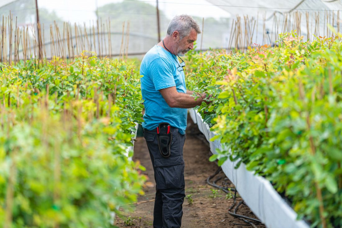 AionSur Pistachos-Palomar-Paradas-min Pistachos El Palomar, referencia en la plantación de un producto con un futuro prometedor Agricultura Paradas destacado