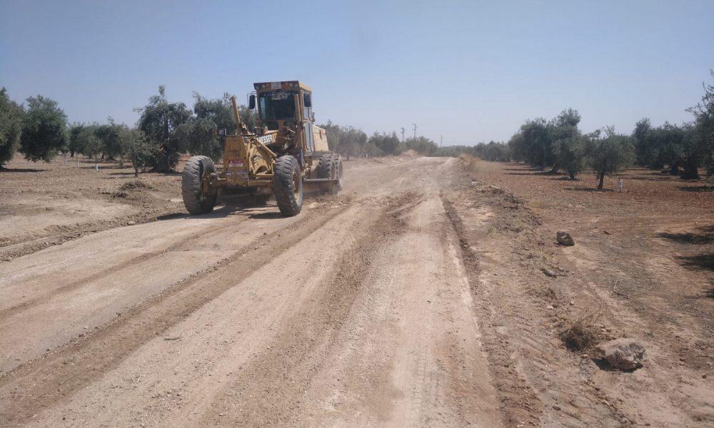 AionSur b977542f-b9b0-4378-8c9d-f0f72abcf413-min-1000x600 Comienza el arreglo de la vereda Espartero en Arahal para la campaña de aceitunas Arahal destacado