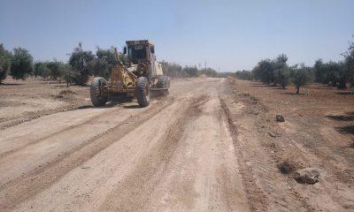 AionSur b977542f-b9b0-4378-8c9d-f0f72abcf413-min-400x240 Comienza el arreglo de la vereda Espartero en Arahal para la campaña de aceitunas Arahal destacado