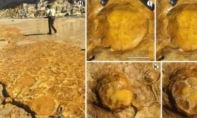AionSur fosiles-donana-400x240 Los últimos grandes mamíferos europeos fueron andaluces Huelva Sociedad