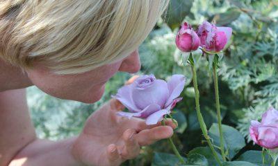 AionSur olfato-400x240 Un estudio demuestra que la pérdida de olfato por coronavirus es distinta a la del resfriado Coronavirus