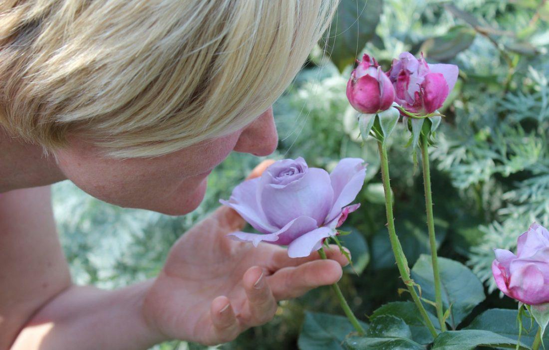AionSur olfato Un estudio demuestra que la pérdida de olfato por coronavirus es distinta a la del resfriado Coronavirus