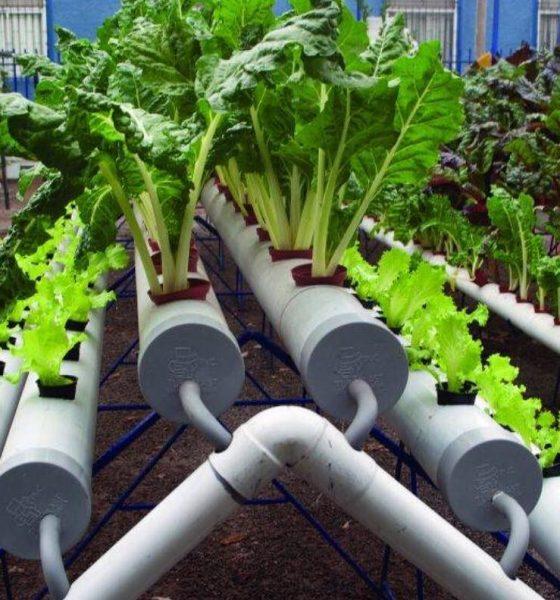 AionSur 45309347_1380747985390653_3091660035395158016_o-min-560x600 Innovador curso de agricultura hidropónica y piscifactoría para jóvenes en Pruna Pruna