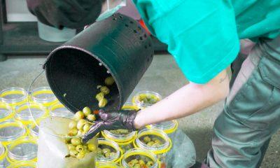 AionSur 4dae3c49-020e-48ef-8a0f-9bebfad39ad9-min-400x240 «Spain Food Nation», campaña para la promoción de la aceituna de mesa y el aceite de oliva Agricultura