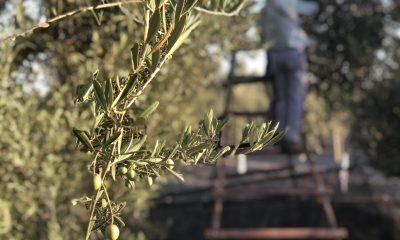 AionSur IMG_5672-min-400x240 Arrancan los cursos y jornadas de Ifapa sobre olivar para el curso 2020-2021 Formación y Empleo