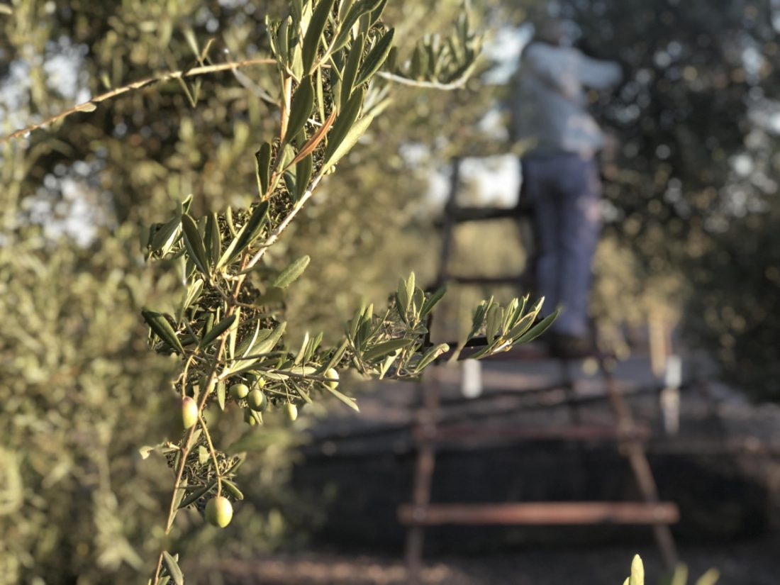 AionSur IMG_5672-min Arrancan los cursos y jornadas de Ifapa sobre olivar para el curso 2020-2021 Formación y Empleo