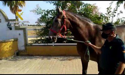 AionSur caballo-guardia-civil-400x240 La Guardia Civil recupera un caballo de carreras robado en Utrera Sucesos