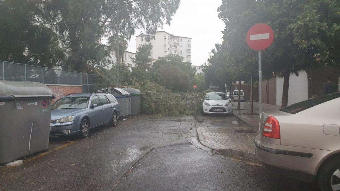 AionSur 038bfa73-7637-4935-b79e-36ef7aac22c2-min Emergencias 112 atiende más de 60 incidencias por el viento y la lluvia en Andalucía Sevilla destacado