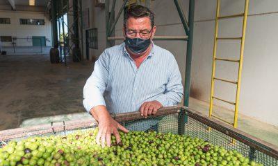 """AionSur 5cbaa7b0-9be9-48bf-986d-4b3a4f8b2d13-min-400x240 Gabriel Cabello, presidente de Agro Sevilla: """"Las aceitunas gordales se venden dentro de un Dry Martini"""" Agricultura destacado"""