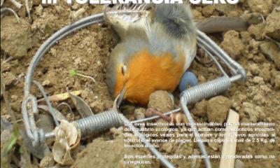 """AionSur Campana-aves-insectivoras-400x240 Jaedilla-Ecologistas en Acción pide vigilancia en el campo de Arahal para evitar la caza ilegal de """"pajaritos"""" Medio Ambiente"""