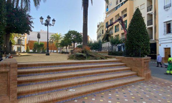 Campaña de poda y tratamiento contra plagas de más de 200 palmeras en Alcalá
