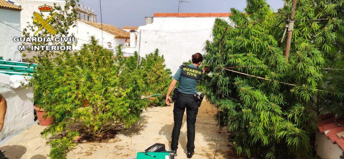 AionSur FOTOGRAFIA-min-1 Un detenido y varios investigados en Aznalcóllar por el cultivo de marihuana en una vivienda ocupada ilegalmente Sucesos