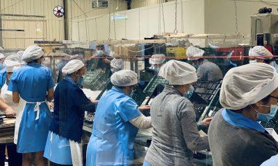 AionSur: Noticias de Sevilla, sus Comarcas y Andalucía Mantecados-Estepa-400x240 La campaña del mantecado mantiene el empleo en Estepa Estepa Provincia