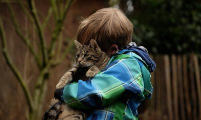 AionSur friendship-2112623_1920-min-400x240 Acuerdo en La Puebla del Río para realizar un Registro de Animales de Compañía Animales