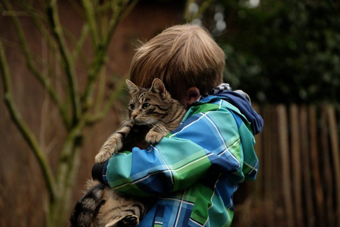 AionSur: Noticias de Sevilla, sus Comarcas y Andalucía friendship-2112623_1920-min Acuerdo en La Puebla del Río para realizar un Registro de Animales de Compañía Animales