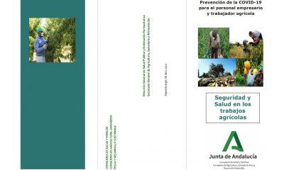AionSur guia-min-400x240 Editado un folleto informativo con medidas para prevenir la COVID-19 destinadas a trabajadores y empresarios agrícolas Sociedad
