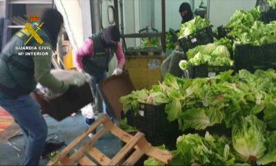 AionSur 2020-11-22_Op_Italica_03-min-1-400x240 Incautados 155 kilos de marihuana y 60 kilos de hachís ocultos entre palets de verdura Sucesos