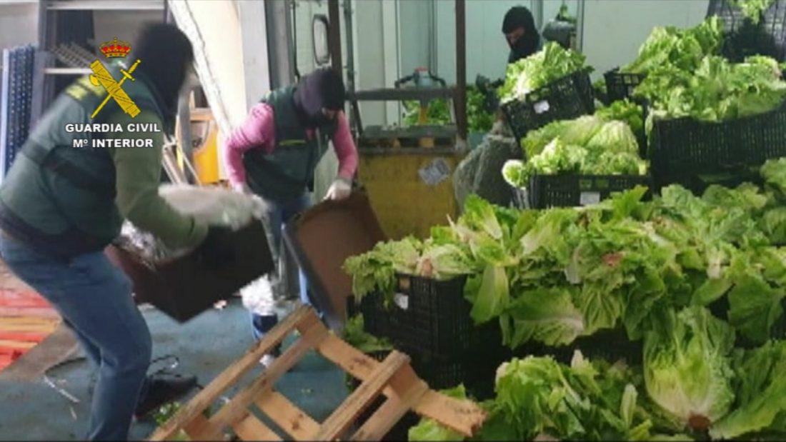 AionSur 2020-11-22_Op_Italica_03-min-1 Incautados 155 kilos de marihuana y 60 kilos de hachís ocultos entre palets de verdura Sucesos