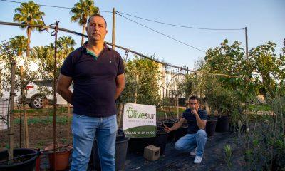 AionSur: Noticias de Sevilla, sus Comarcas y Andalucía 8d71977d-0330-4379-a88c-7da8745223a7-min-400x240 Olivos para el confinamiento en Arahal Empresas destacado