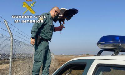 AionSur HALCON-min-400x240 La Guardia Civil recupera un halcón atrapado en una valla metálica Sucesos destacado