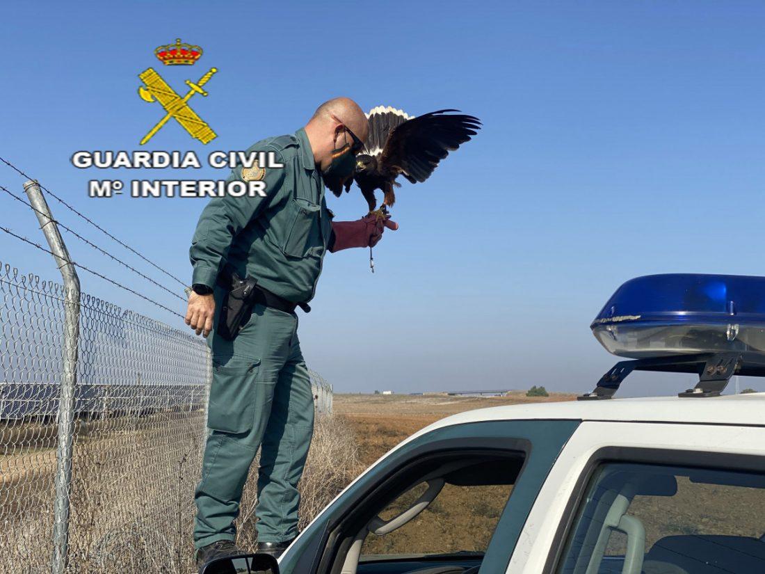 AionSur HALCON-min La Guardia Civil recupera un halcón atrapado en una valla metálica Sucesos destacado