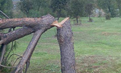 AionSur Pinos-ataque-400x240 Destrozan de madrugada un pinar a las afueras de Gerena Gerena destacado