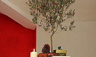 AionSur f149fe09-af29-4299-bac8-be87febaf20a-min-400x240 Proponen colocar un olivo como árbol de Navidad en El Viso del Alcor Campiña de Carmona