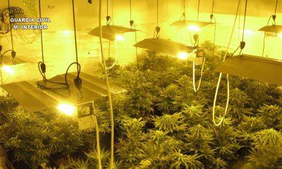 AionSur PLANTACION-min-400x240 Detenido en Mairena del Alcor por tener una plantación de marihuana en una vivienda ocupada ilegalmente Sucesos