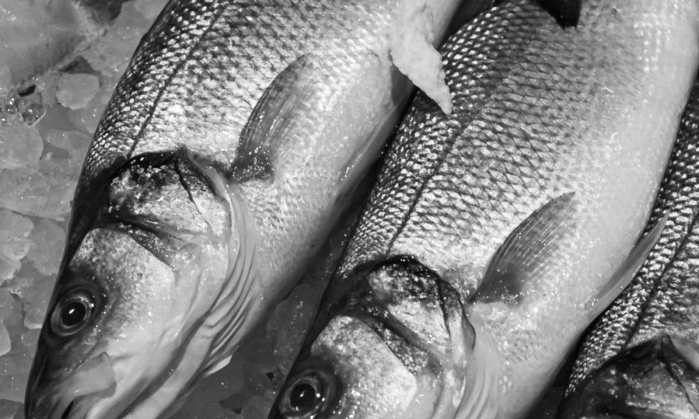 La Guardia Civil interviene en el año 2020 casi 40.000 kilos de pescado ilegal