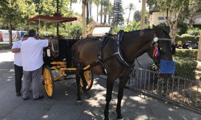 AionSur Caballos-Sevilla-1-400x240 Hosteleros y coches de caballos se unen para ayudar a salir adelante Coronavirus destacado