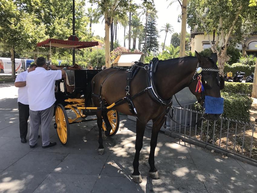 AionSur: Noticias de Sevilla, sus Comarcas y Andalucía Caballos-Sevilla-1 Hosteleros y coches de caballos se unen para ayudar a salir adelante Coronavirus destacado