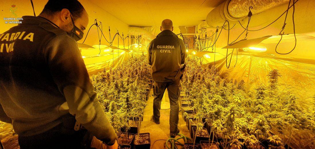 AionSur LOS-PALACIOS_O_HOGUERAS-min Desmantelada una plantación de marihuana en una nave de Los Palacios Sucesos