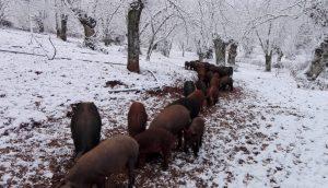 AionSur nieve-aracena-5-300x172 La nieve deja estampas para el recuerdo en la Sierra de Aracena, al norte de la provincia de Huelva Sociedad