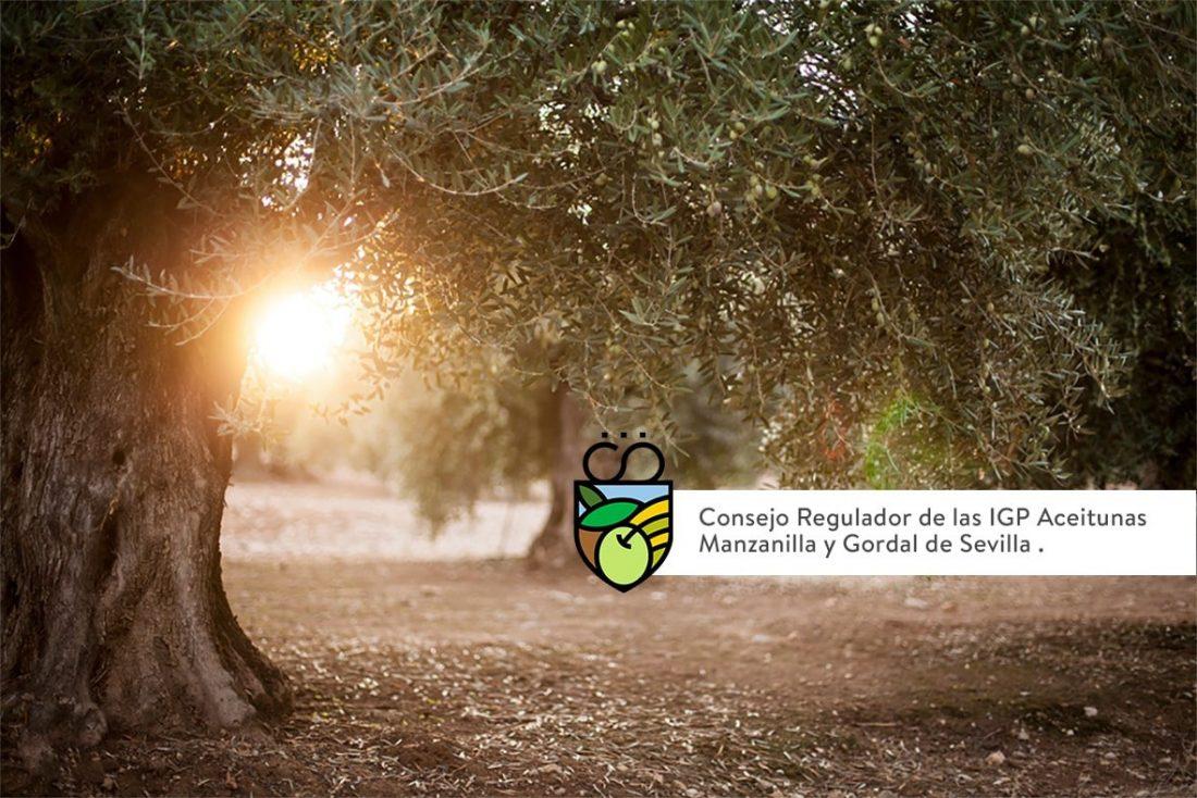 AionSur: Noticias de Sevilla, sus Comarcas y Andalucía foto-NP-4-02-21-Consejo-Regulador-IGP-Manzanilla-y-Gordal-de-Sevilla-min Satisfacción de la IGP de la Manzanilla y Gordal por el apoyo de más de 3.500 inscritos del sector olivarero Agricultura