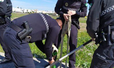 AionSur: Noticias de Sevilla, sus Comarcas y Andalucía 3314a573-b989-4ac3-908e-91e3c988fd8e-min-400x240 Agentes de la Policía Local de Arahal rescatan una oveja caída en un imbornal de un polígono industrial Arahal