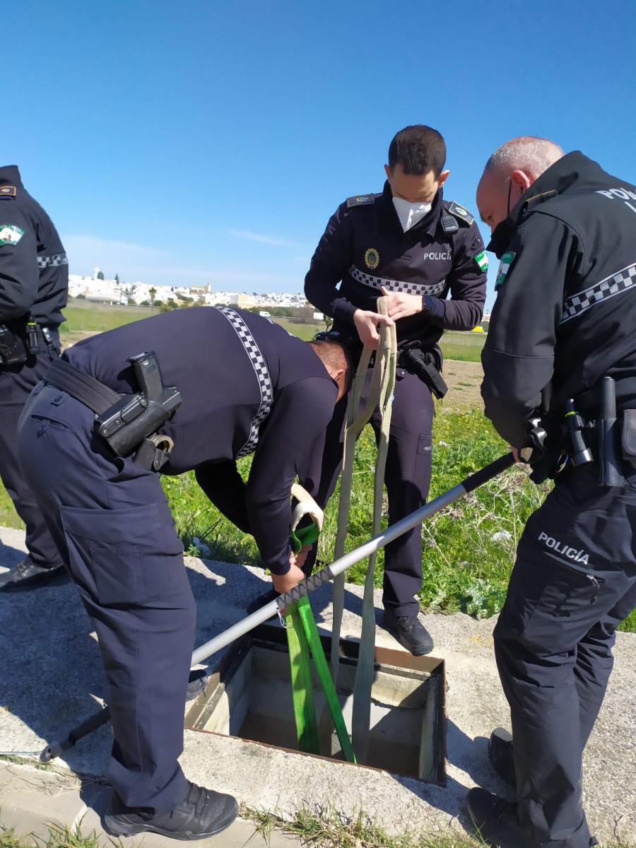 AionSur: Noticias de Sevilla, sus Comarcas y Andalucía 3314a573-b989-4ac3-908e-91e3c988fd8e-min Agentes de la Policía Local de Arahal rescatan una oveja caída en un imbornal de un polígono industrial Arahal