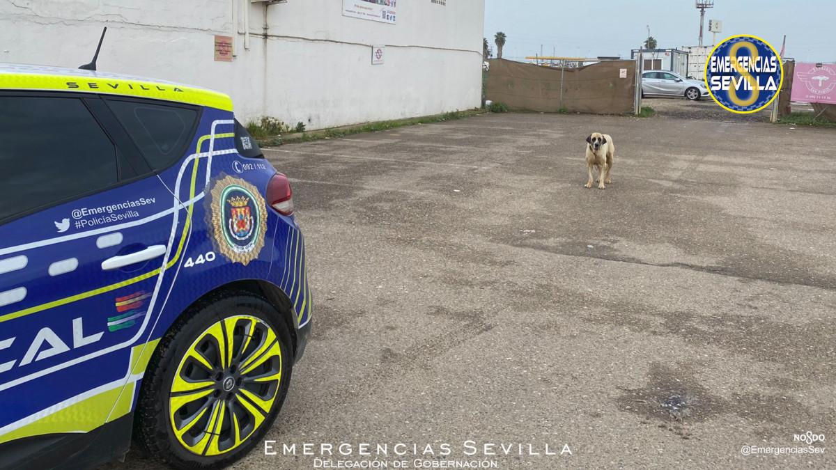 AionSur: Noticias de Sevilla, sus Comarcas y Andalucía Perro-Sevilla Herida grave una mujer atacada por un perro en Sevilla Sucesos destacado