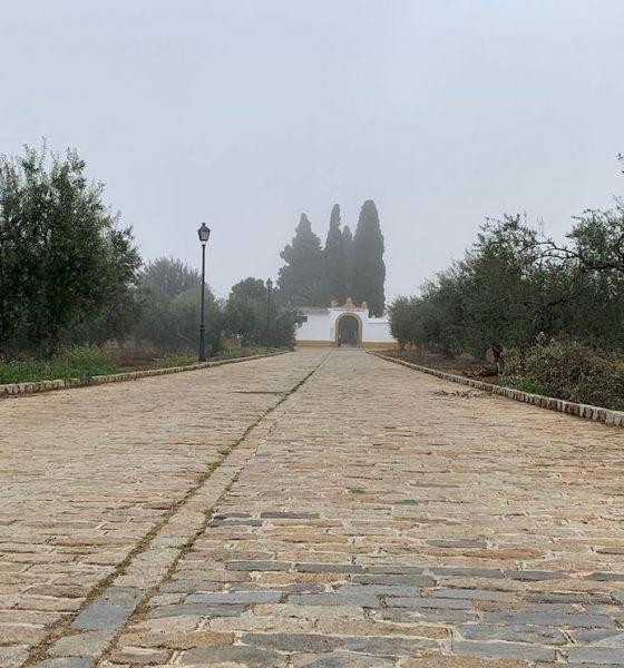 AionSur: Noticias de Sevilla, sus Comarcas y Andalucía cementerio-gerena-560x600 Piden que la calle del cementerio de Gerena lleve el nombre de 'Las 17 Rosas de Guillena' Gerena
